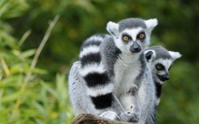 MADAGASCAR: Patent Applications
