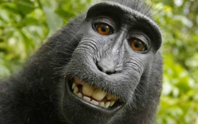 Monkey Selfie Copyright Case