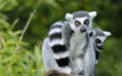 MADAGASCAR: Design Applications